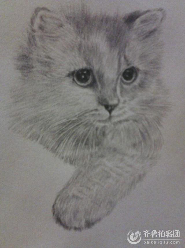 夏淑云的铅笔画-----猫