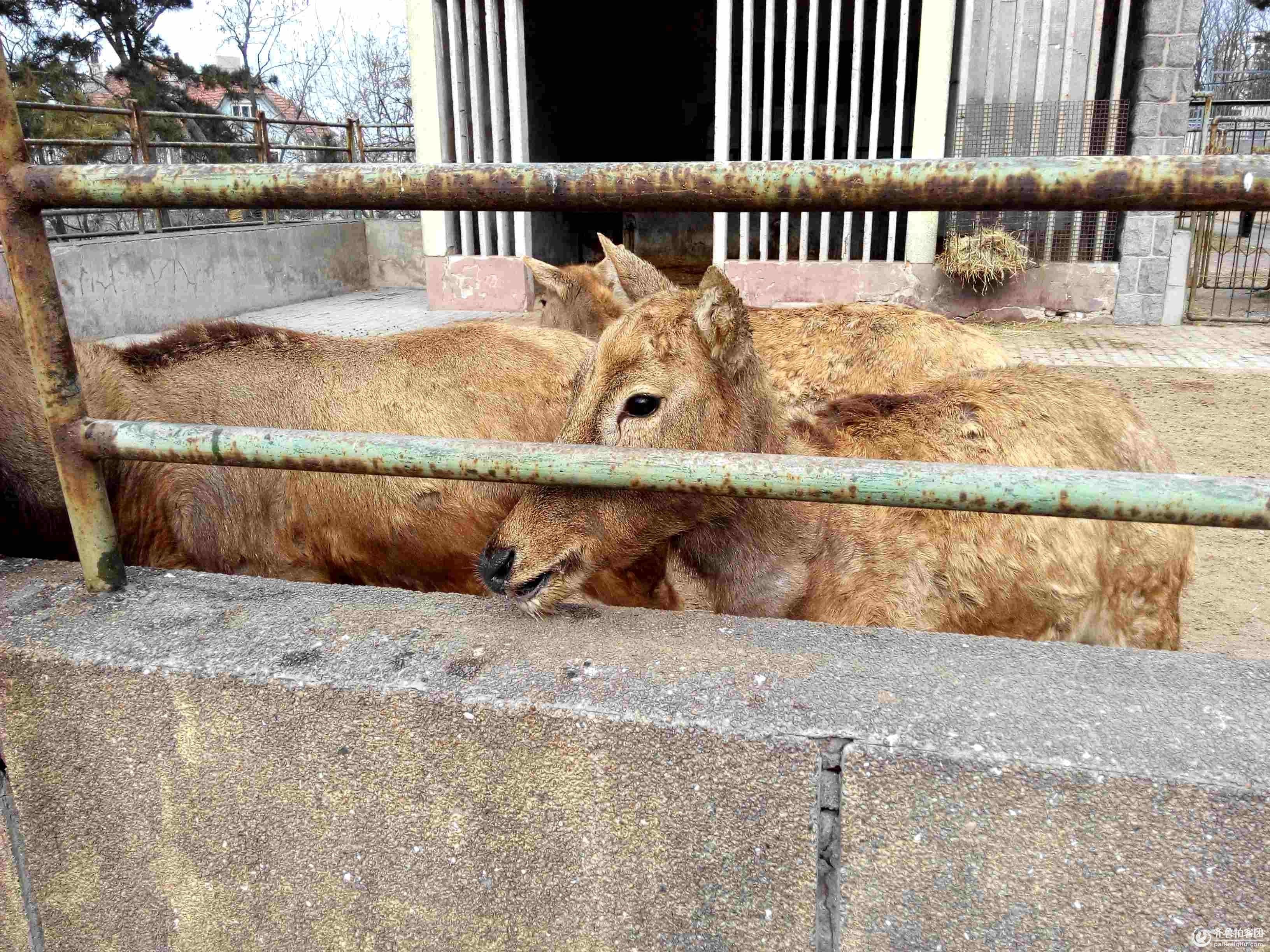 拍自青岛动物园(组照) 摄影 瞩远