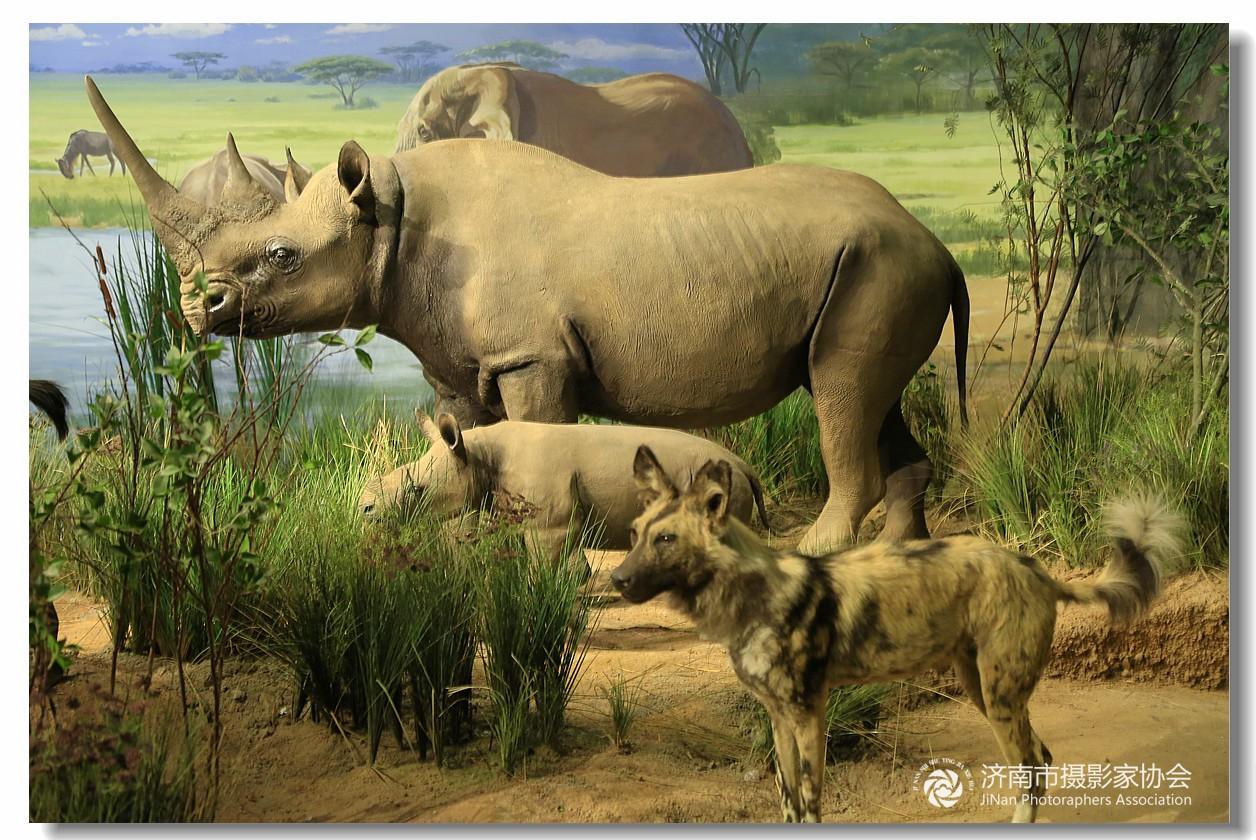 壁纸 大象 动物 犀牛 野生动物 1256_840