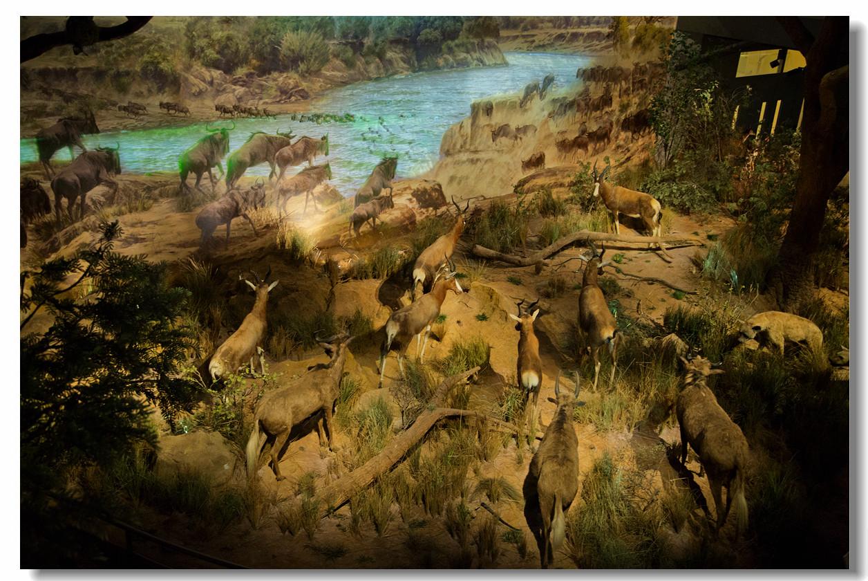 省博物馆--非洲野生动物大迁徙展