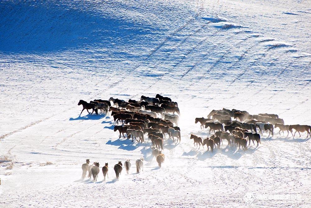 雪地奔马-4.jpg