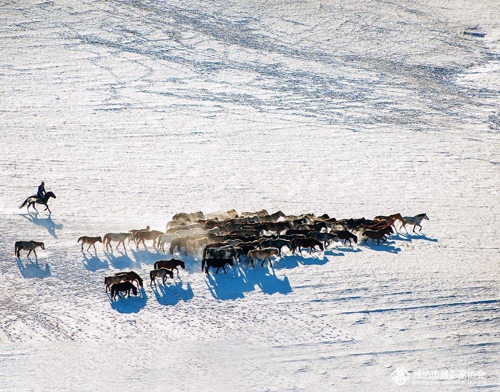雪地奔马-6.jpg