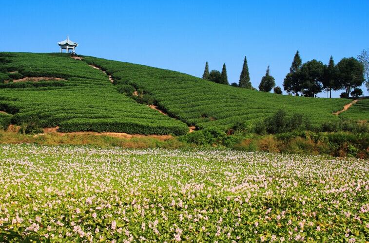 简单朴素的田园风景