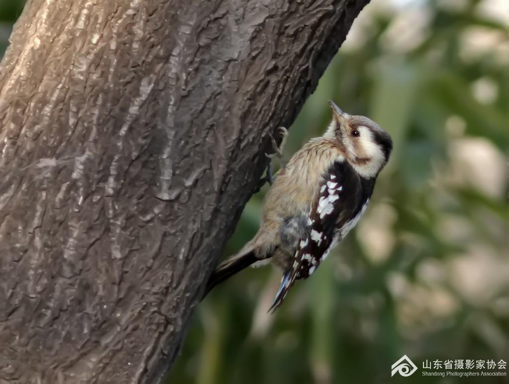 法国啄木鸟丝袜bt