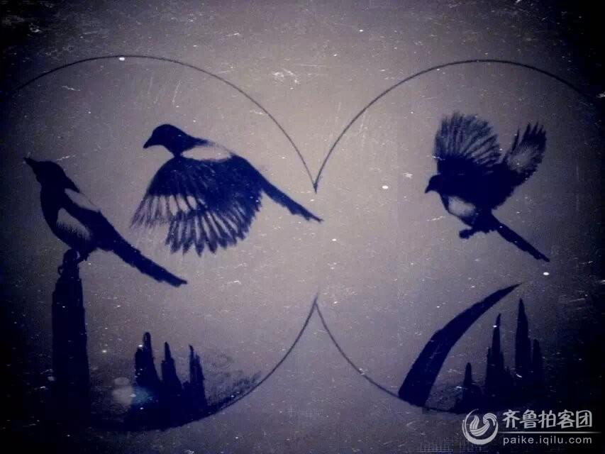 夏淑云的铅笔画------喜鹊