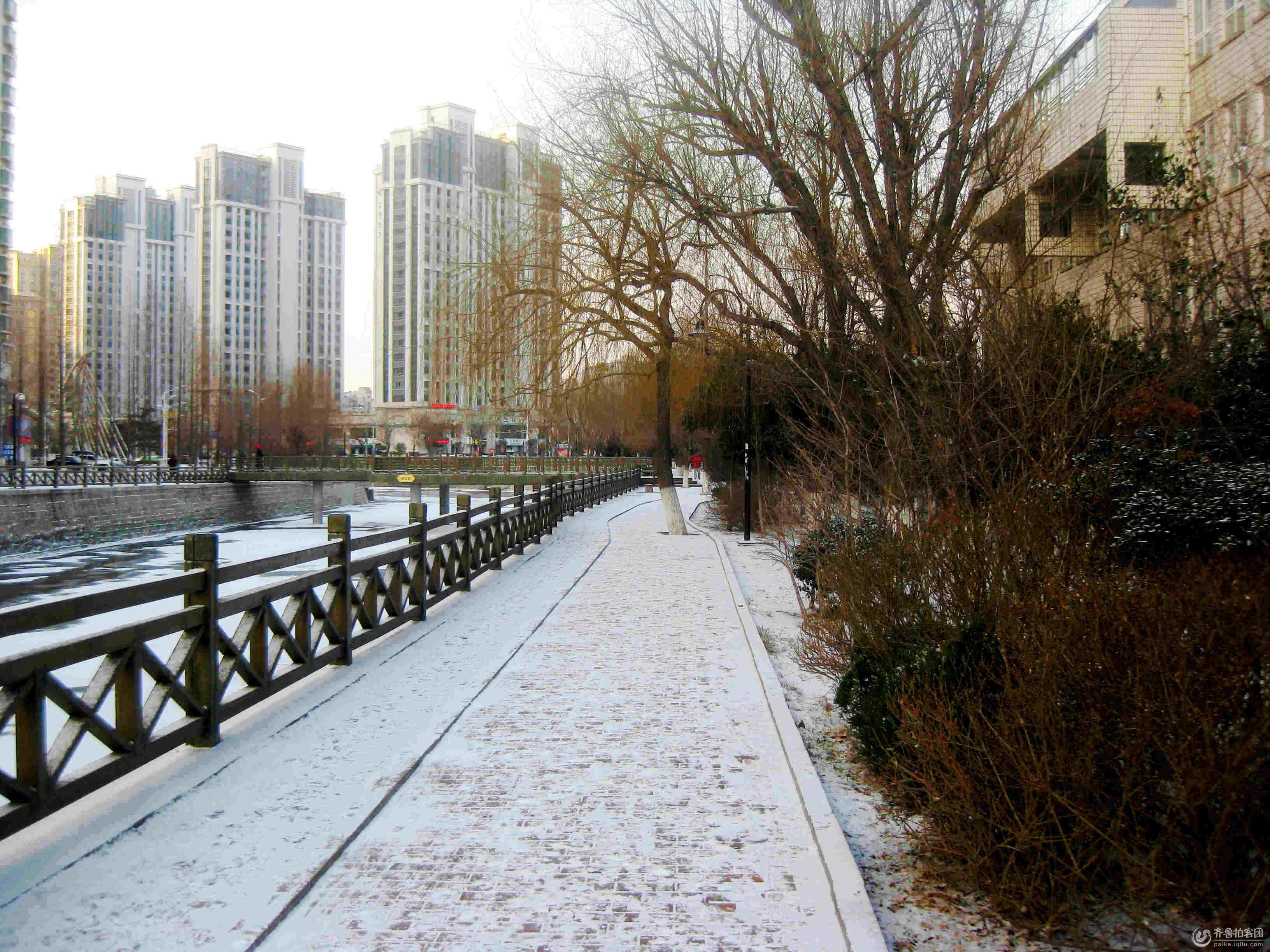 青岛海泊河畔雪景 摄影 瞩远