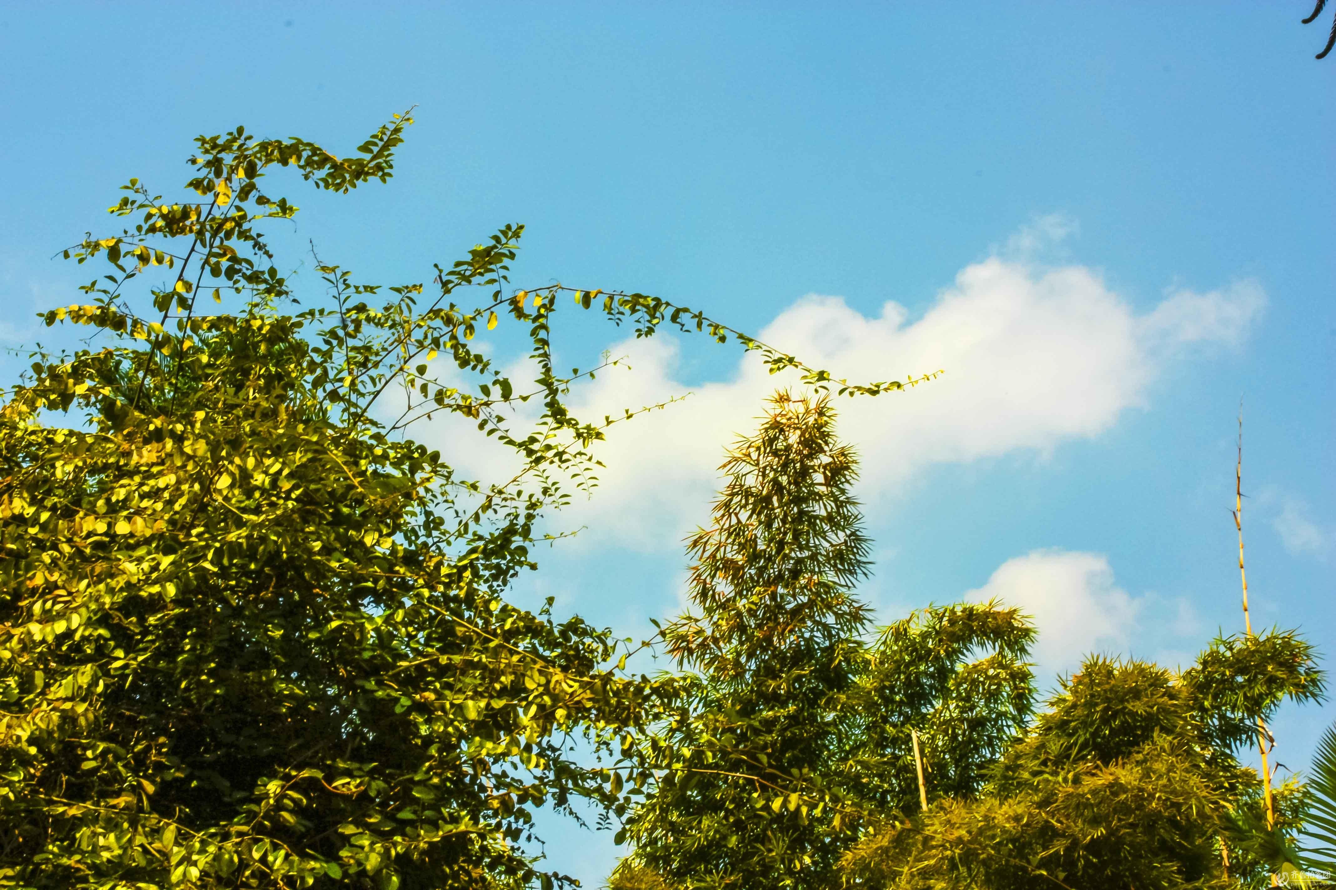 蓝天白云绿树jpg04.jpg
