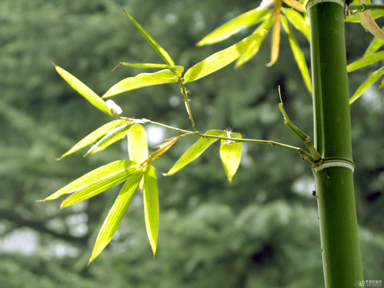 蜻蜓翠竹图画法步骤