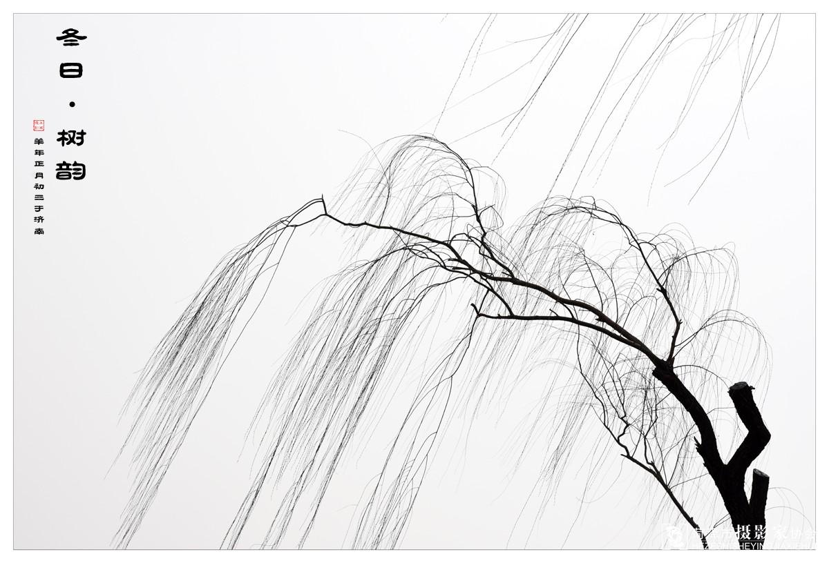 画树的方法步骤图