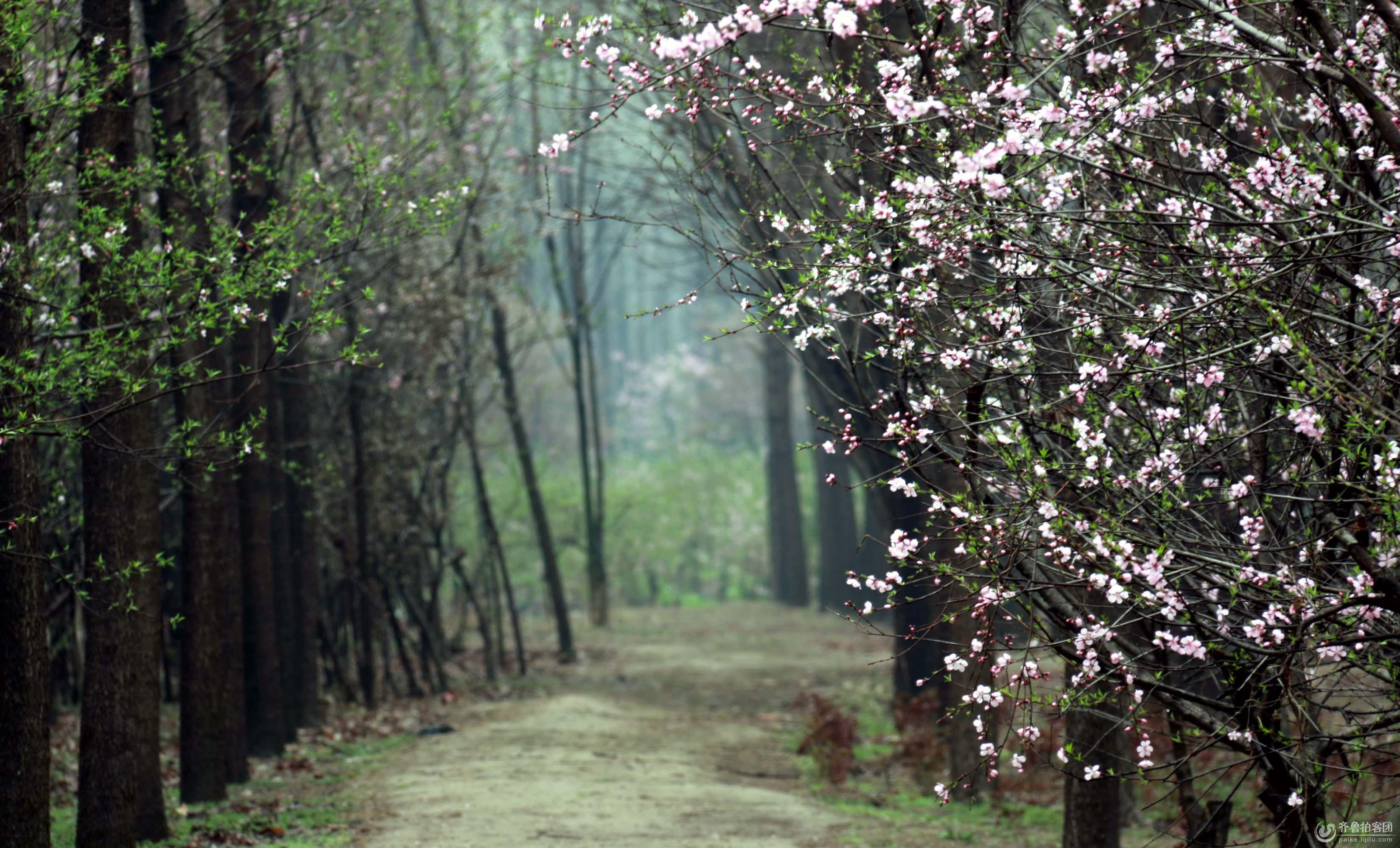 树林  分享到:qq空间新浪微博腾讯微博人人网微信qq