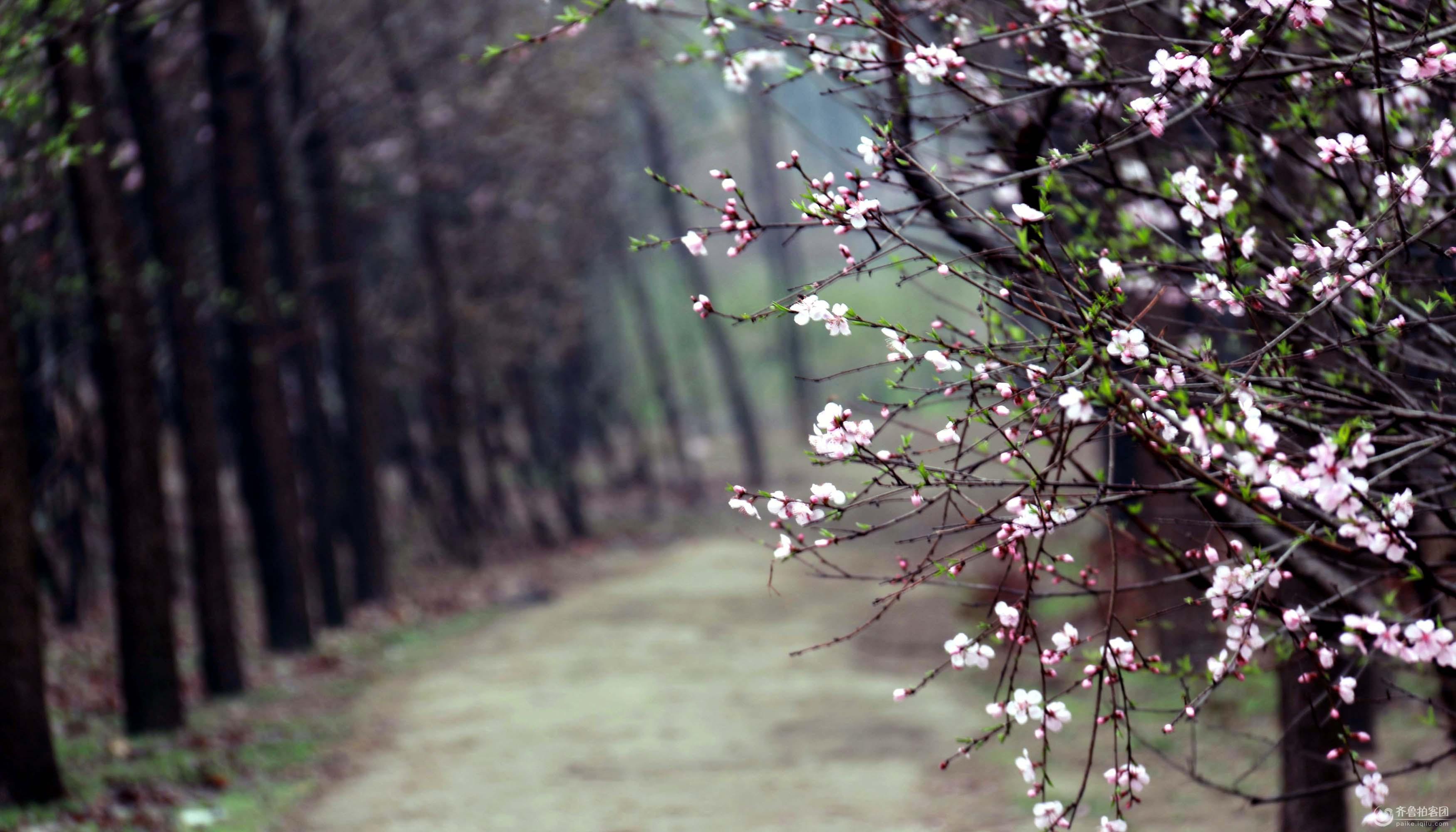 雨后,那片小树林