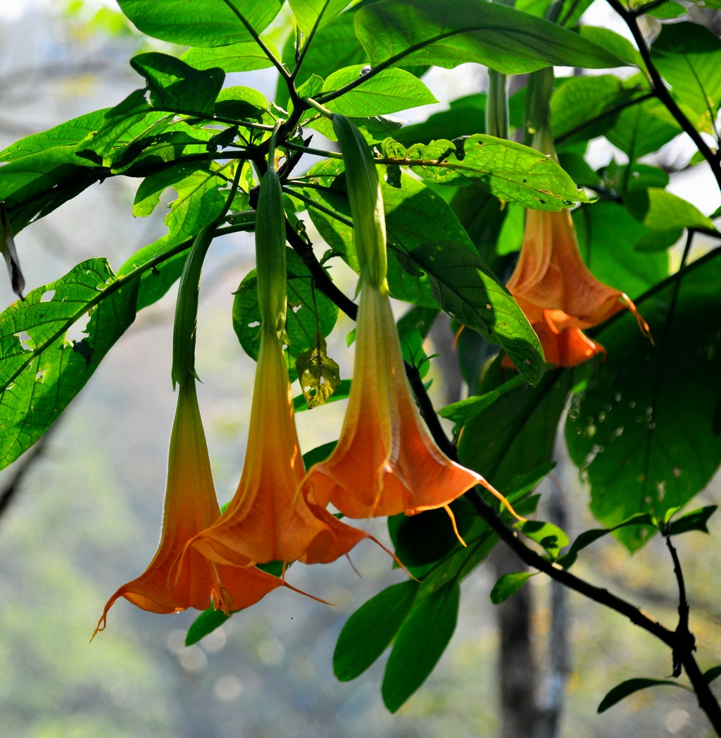 热带雨林花 - 花卉植物 - 齐鲁社区 齐鲁社区