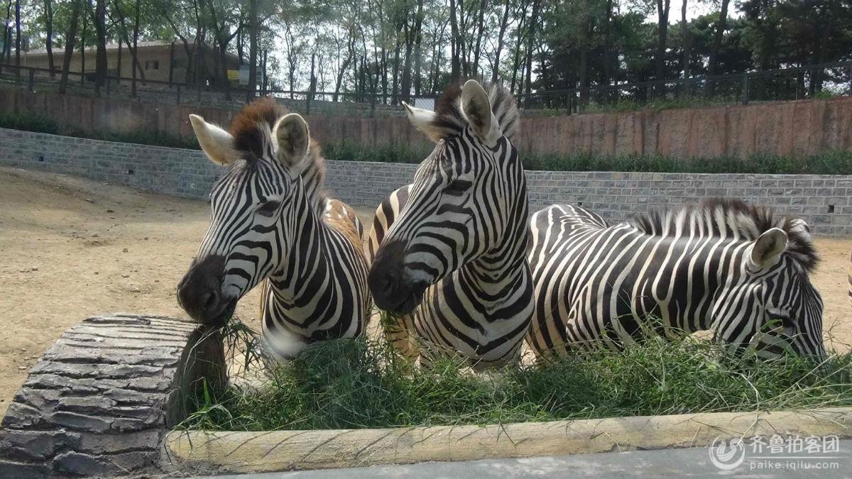 济南野生动物园 - 菏泽拍客