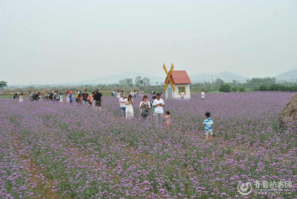 徐州市贾汪区紫海蓝山采风