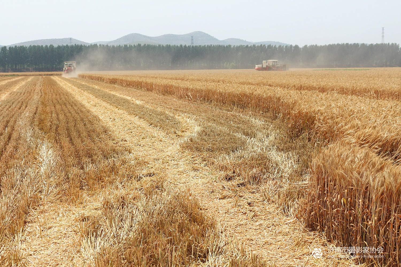 七律·观麦收与老农聊天 - 雨林 - 雨 林 诗 草