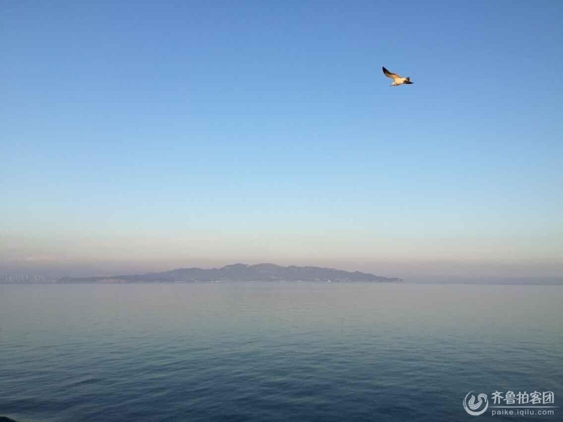 微信头像海鸥风景