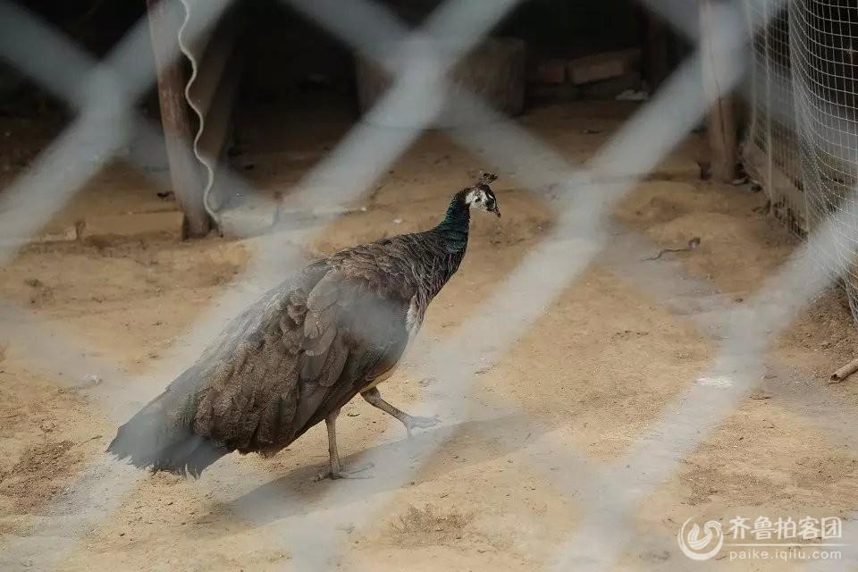 69 菏泽拍客 69 动物  分享到:qq空间新浪微博腾讯微博人人网微信