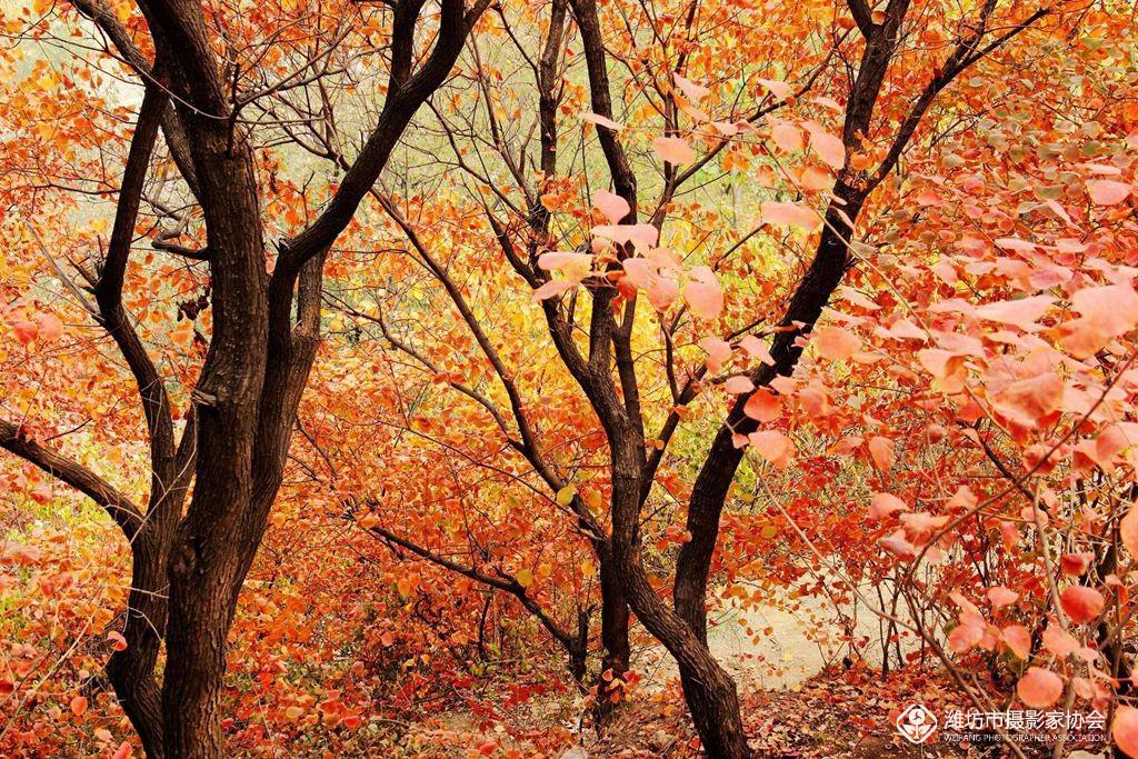 秋天红叶图片
