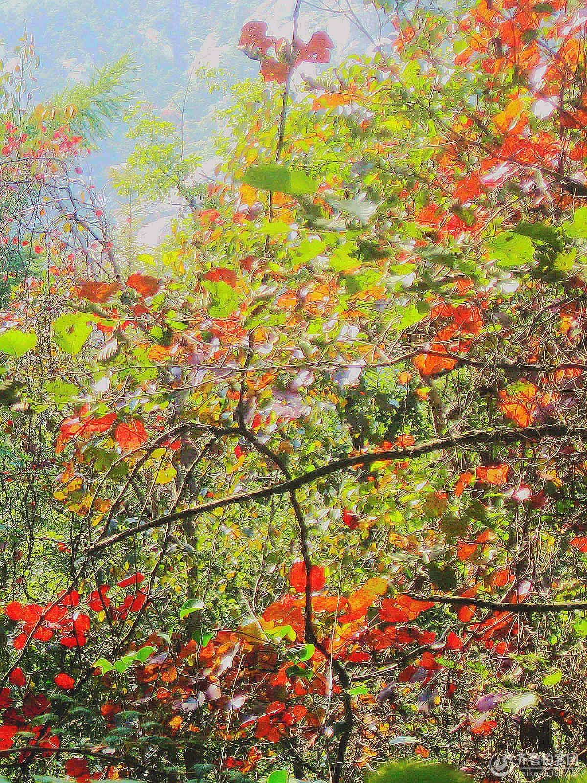 山中红叶(2/2) 摄影 瞩远 - 青岛拍客 - 齐鲁社区