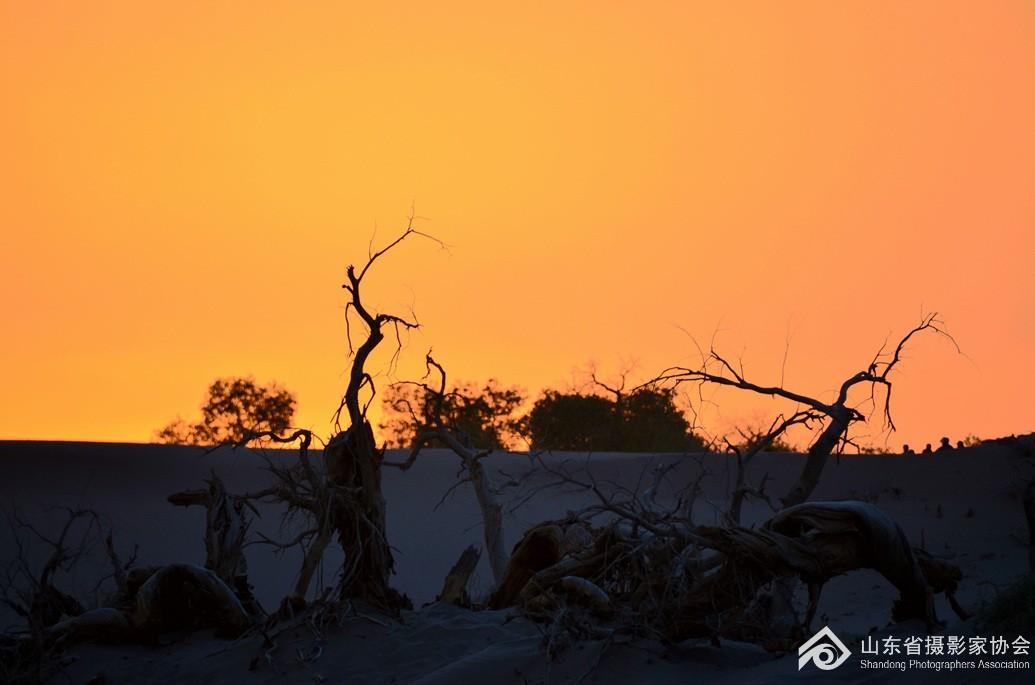 夕阳西下怪树林 - 风光 - 齐鲁社区 齐鲁社区