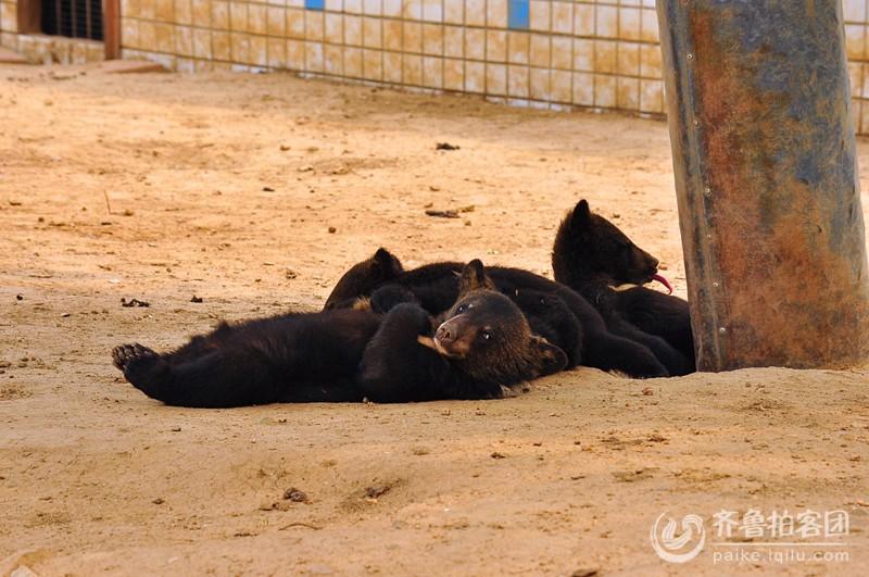 济南野生动物园 - 菏泽拍客 - 齐鲁社区 - 山东最大的