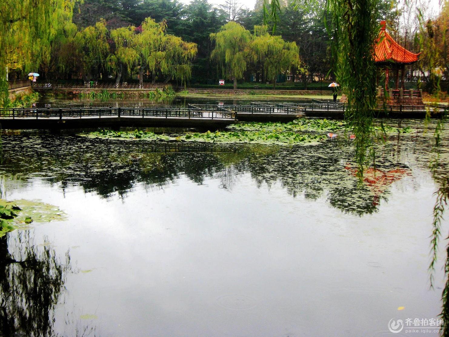 雨天公园景(8/8) 摄影 瞩远 - 青岛拍客 - 齐鲁社区