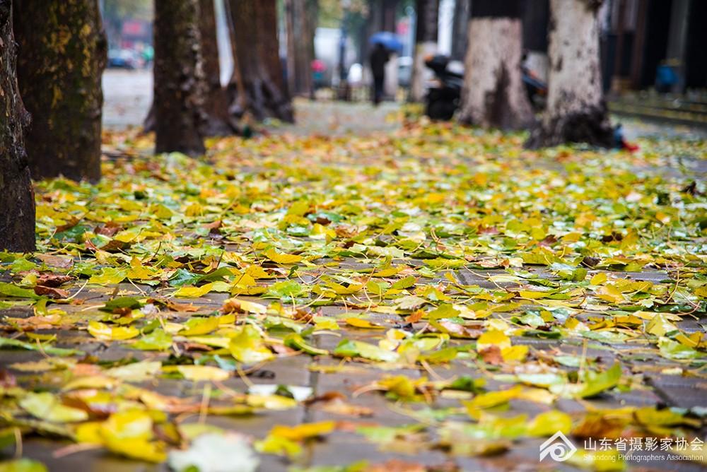 《秋雨》王卉15665873801.jpg