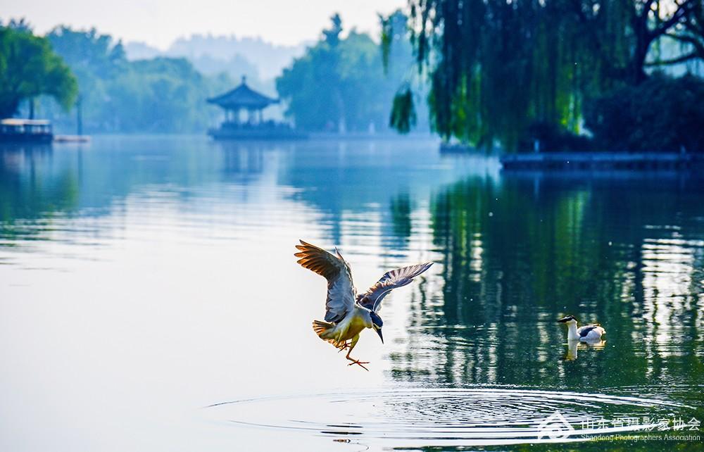 《夏日明湖》-王卉-15665873801.jpg