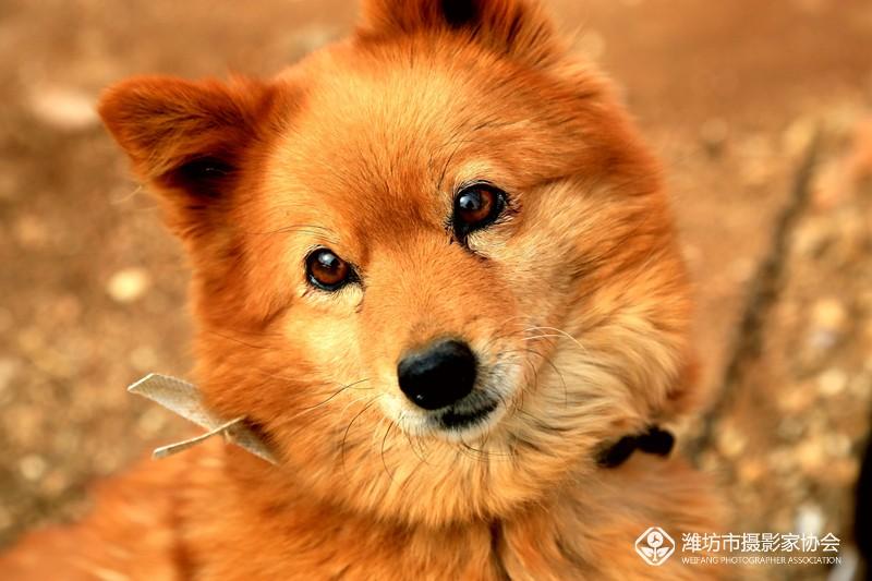 可爱的小狗狗!