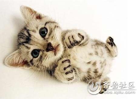 吕中楼家可爱的小猫猫
