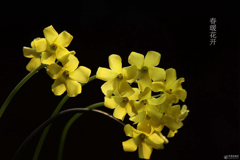 行吧春暖花