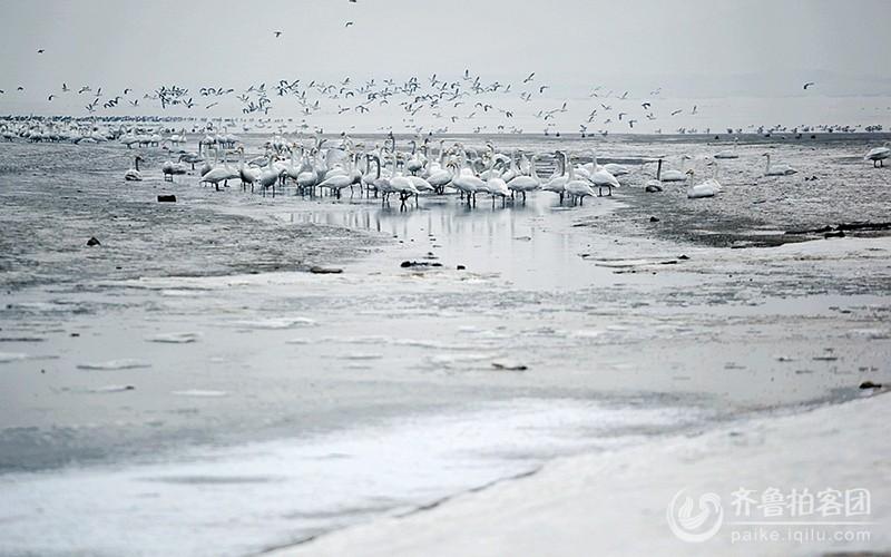 田宏耀  《荣成天鹅湖》.JPG