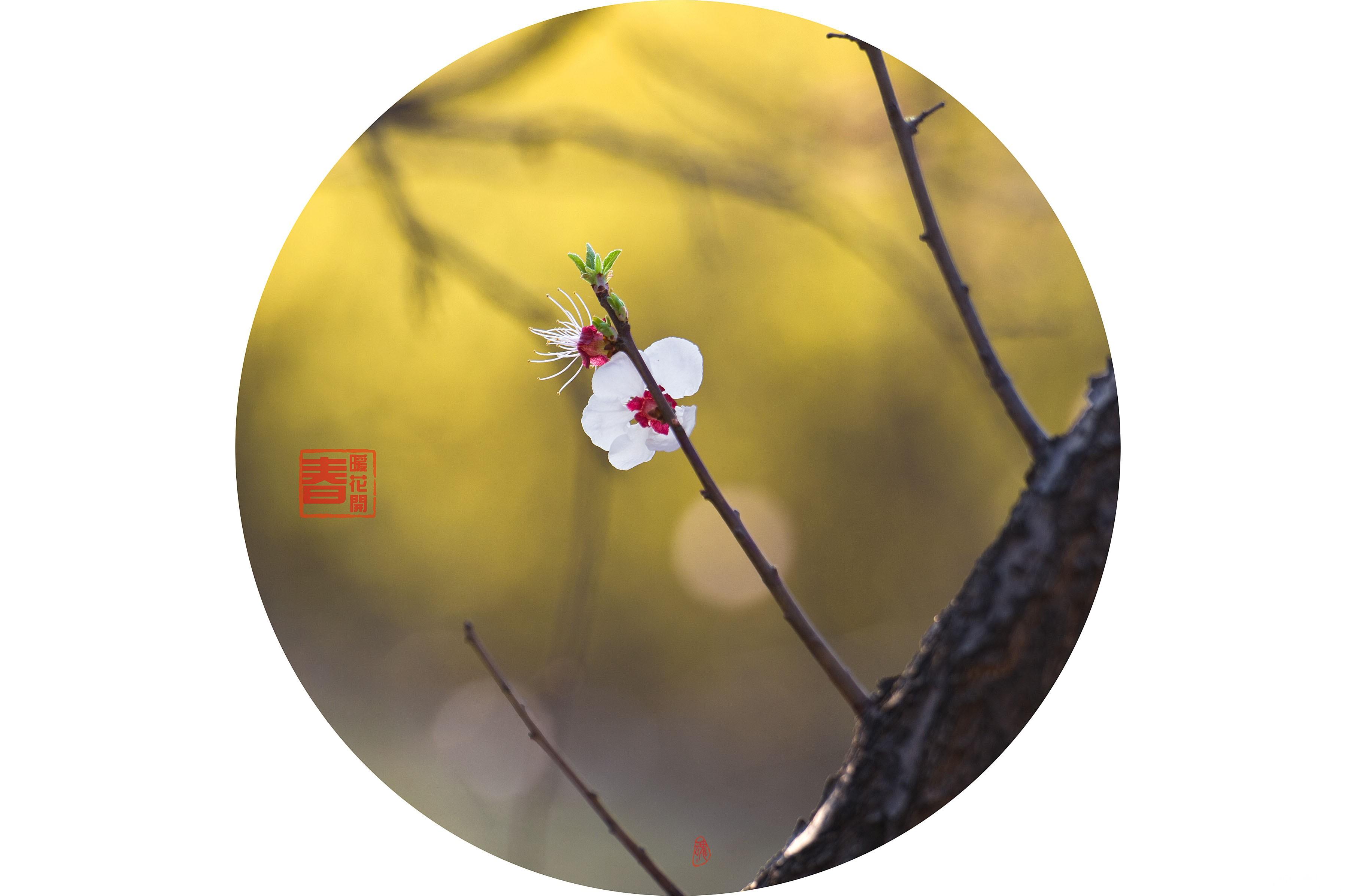格格修好片春花123.jpg