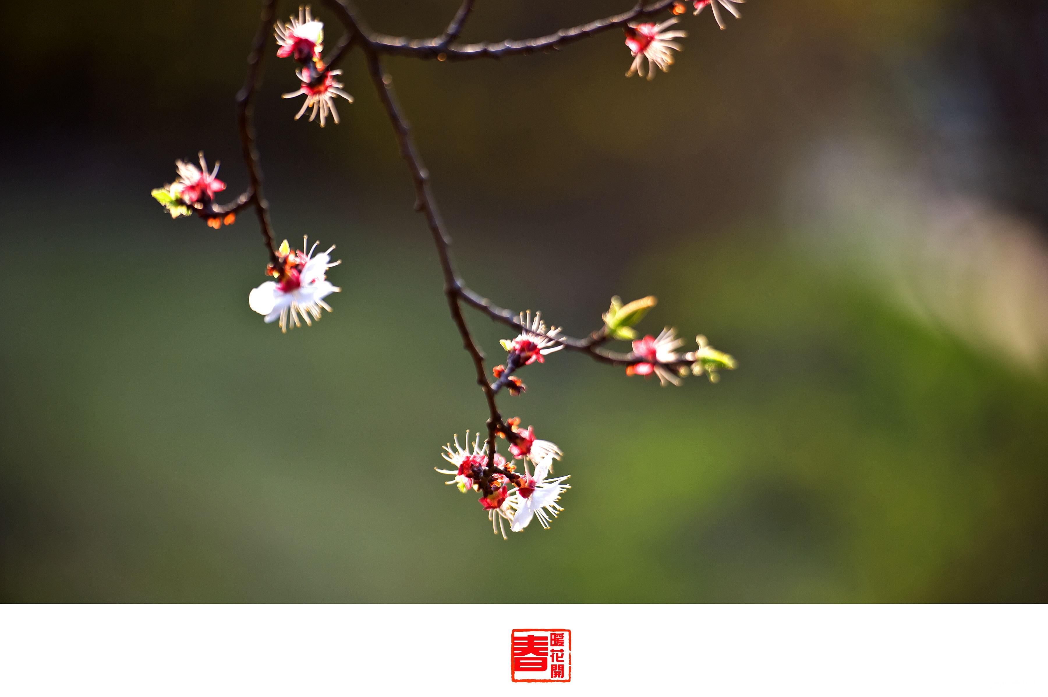 格格修好片春花2123.jpg
