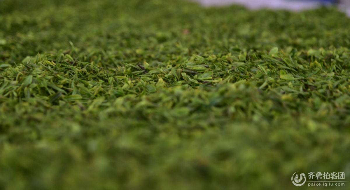 北茶印象——之茶叶仙子