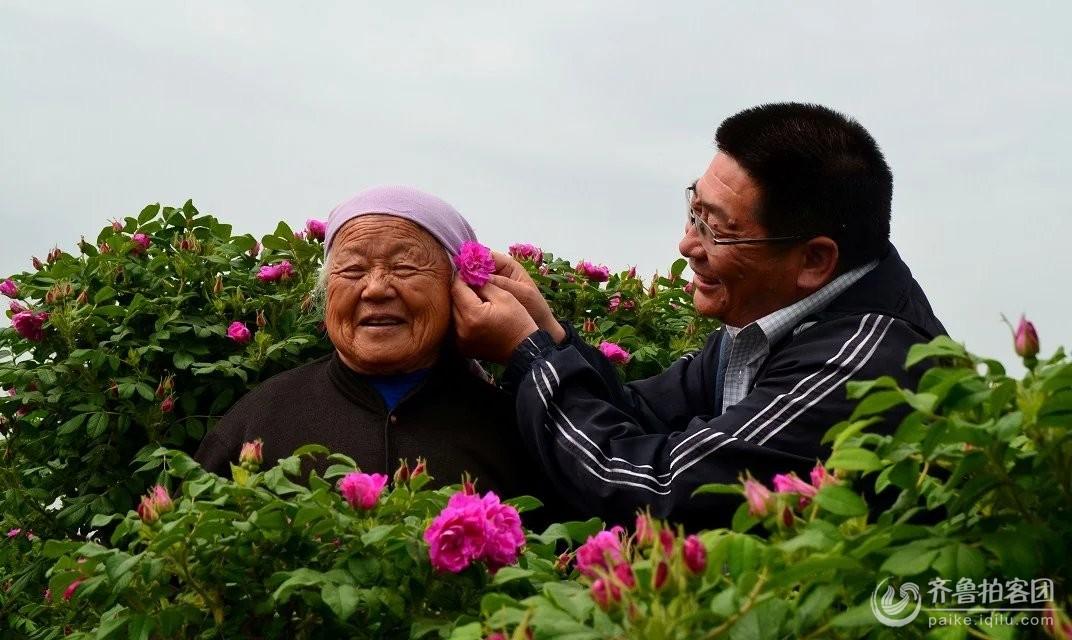 母亲节快乐——摘一朵最俏的玫瑰花献给可爱的老妈妈