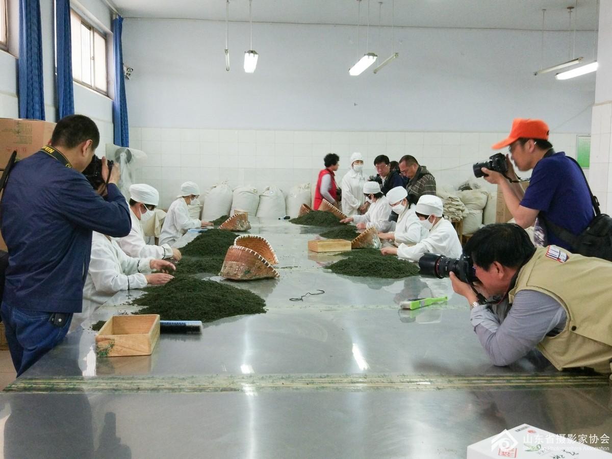 会员们在车间拍摄职工茶叶制作.jpg