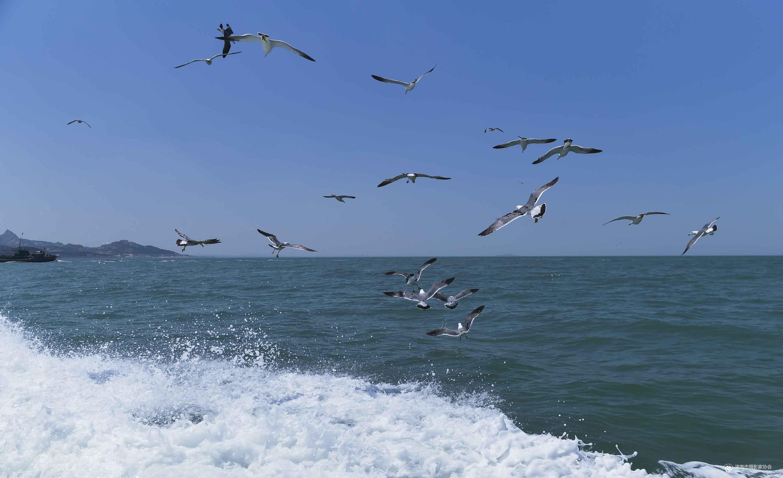 浪花飞舞海鸥飞翔