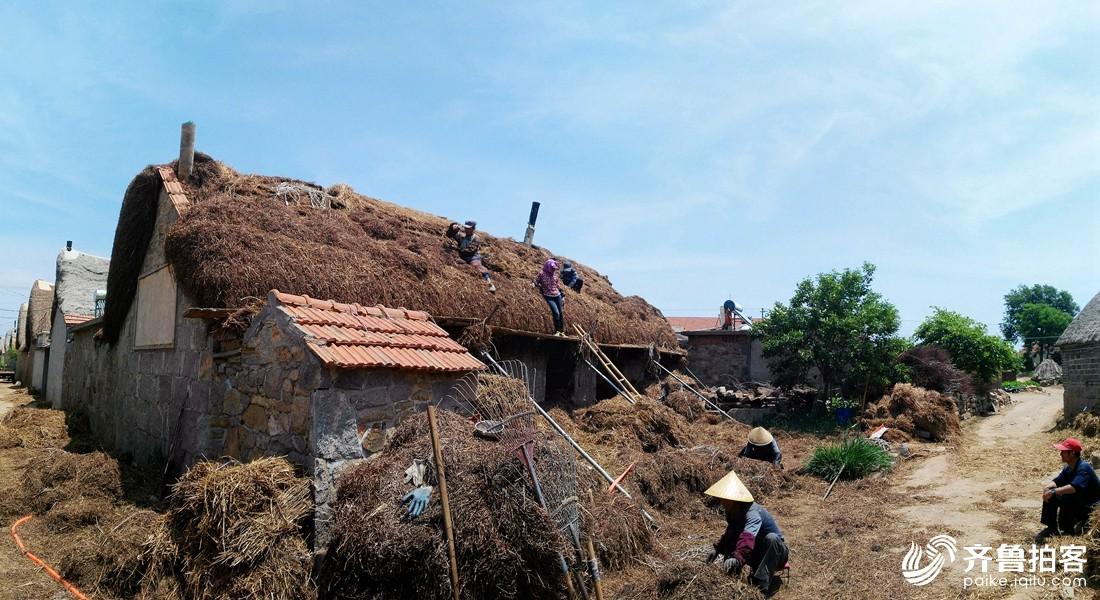 苫匠、工匠们在东墩村 扎草捆 苫房顶.jpg