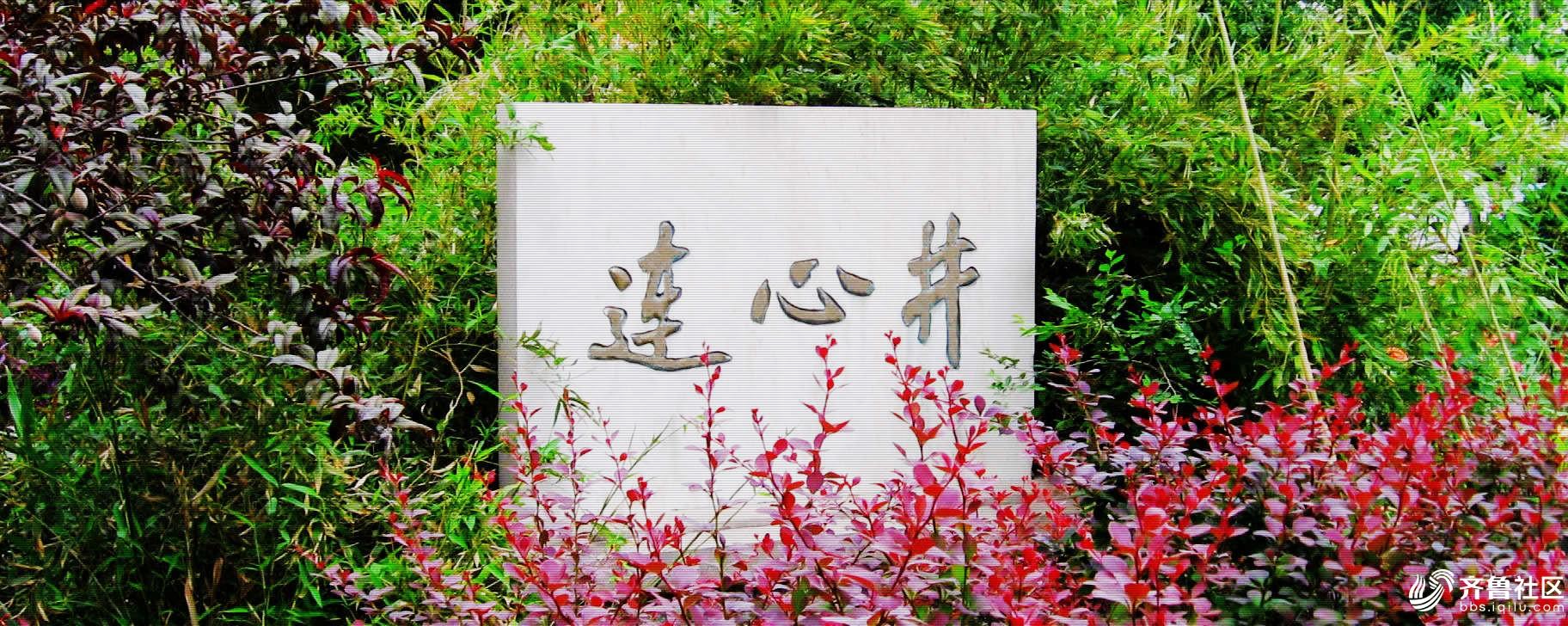 景色幽美,心连着心。沧州刘瑞华2016年之夏拍摄。.JPG
