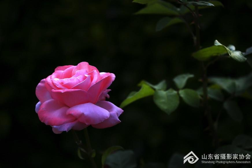 _MG_6805-.jpg
