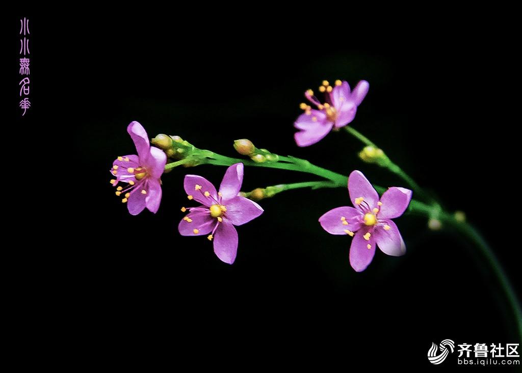 小小无名花