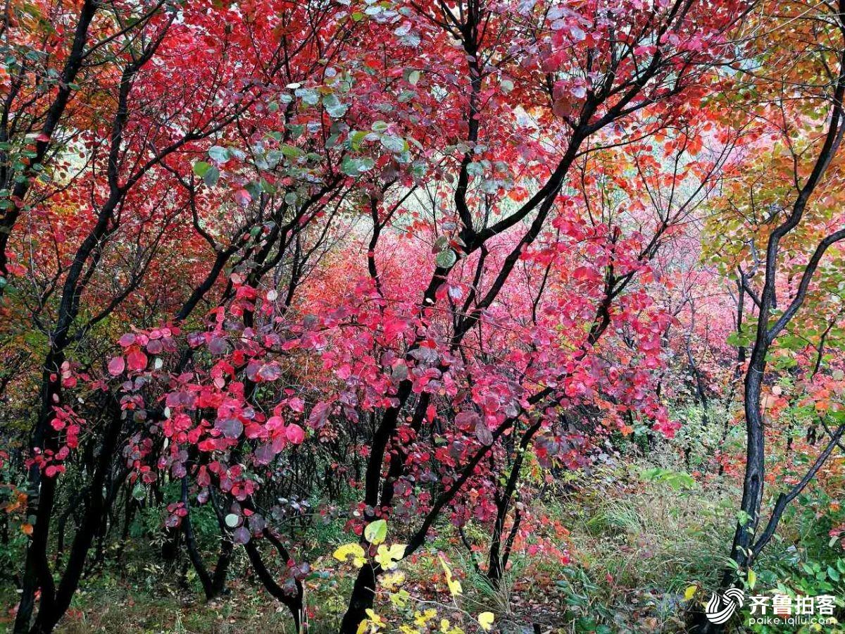 秋雨绵绵红叶谷