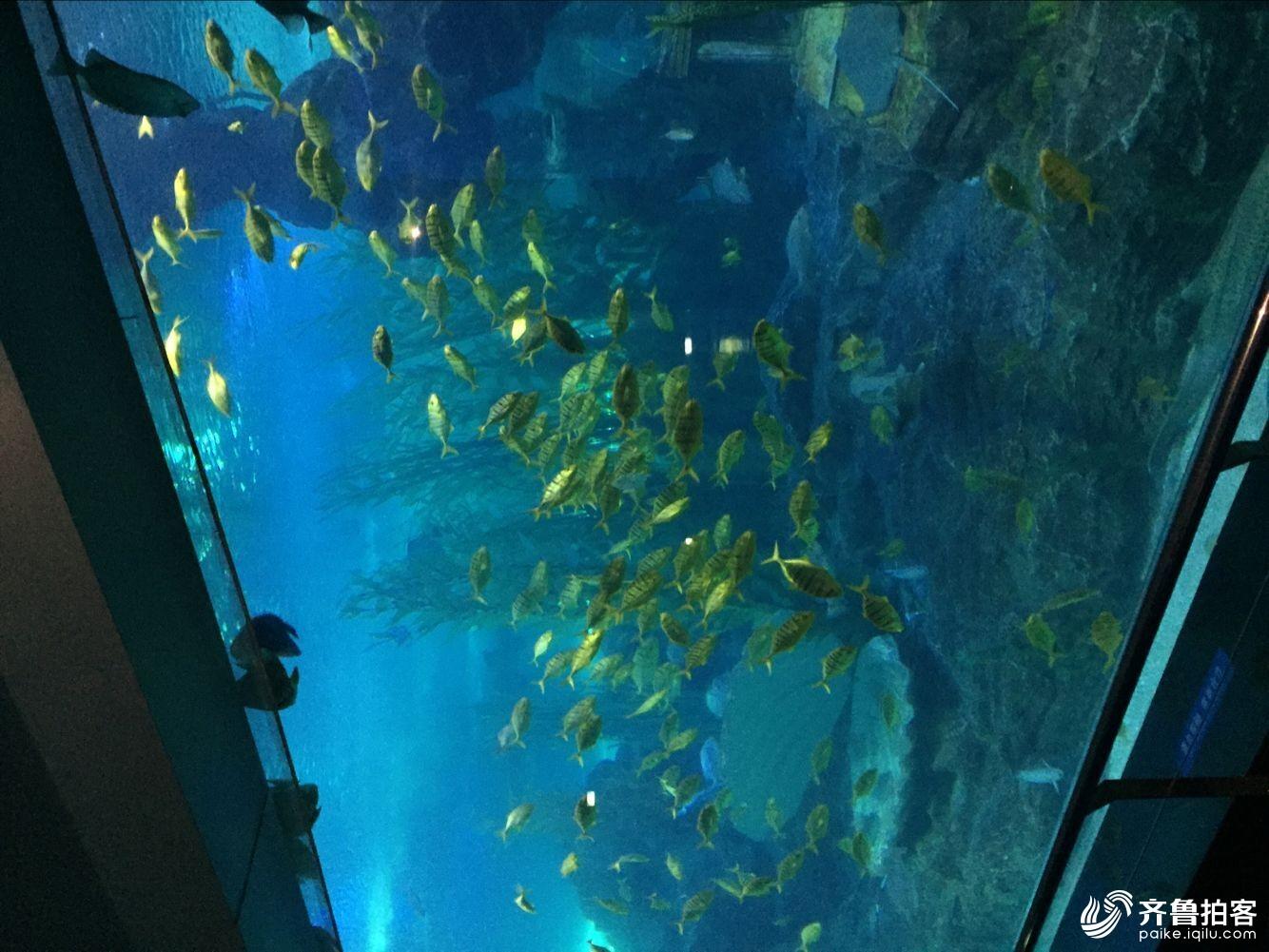 论坛 69 齐鲁拍客团 69 菏泽拍客 69 海底世界  分享到:qq空间
