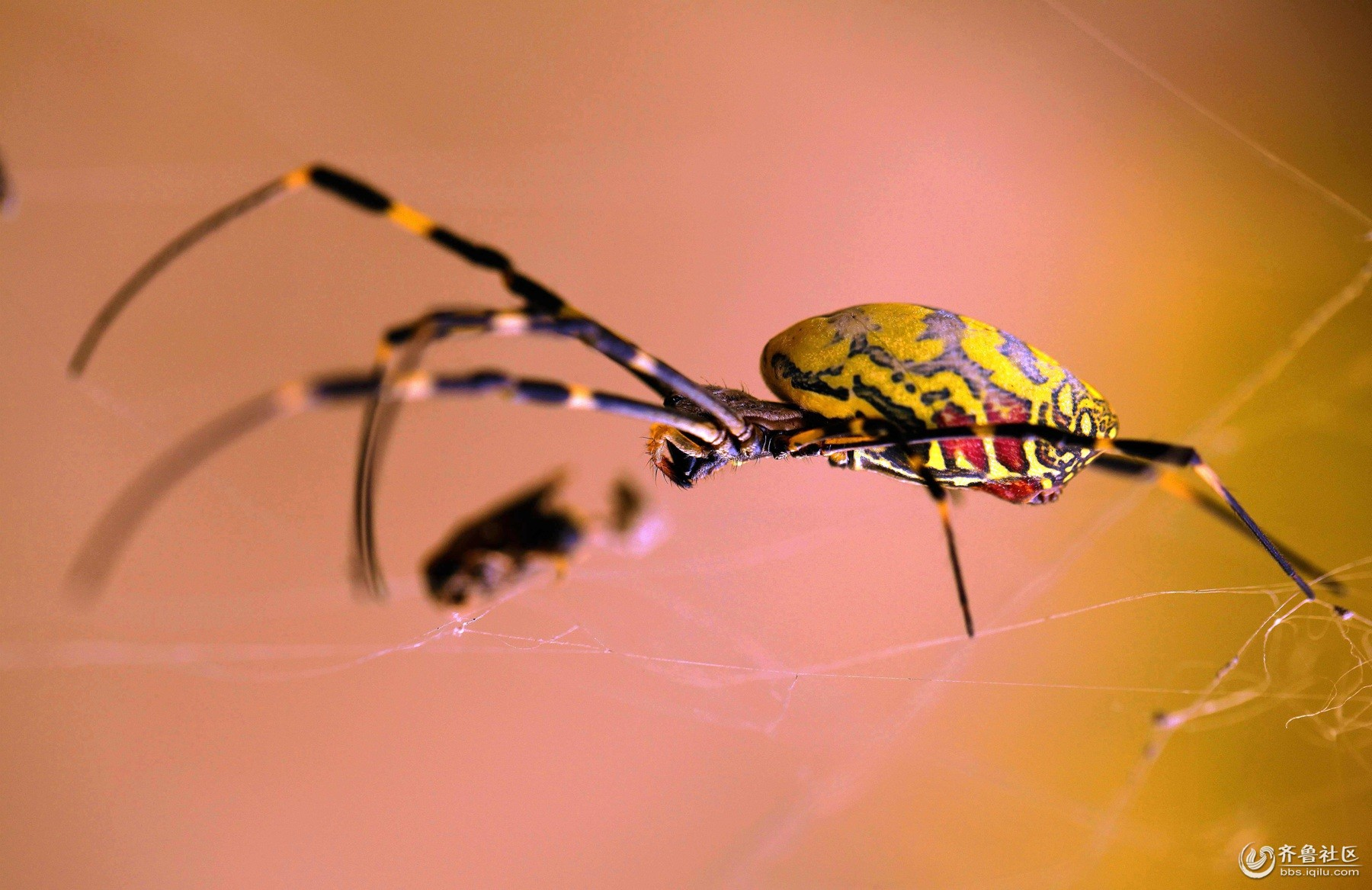蜘蛛织网 步骤图 大班
