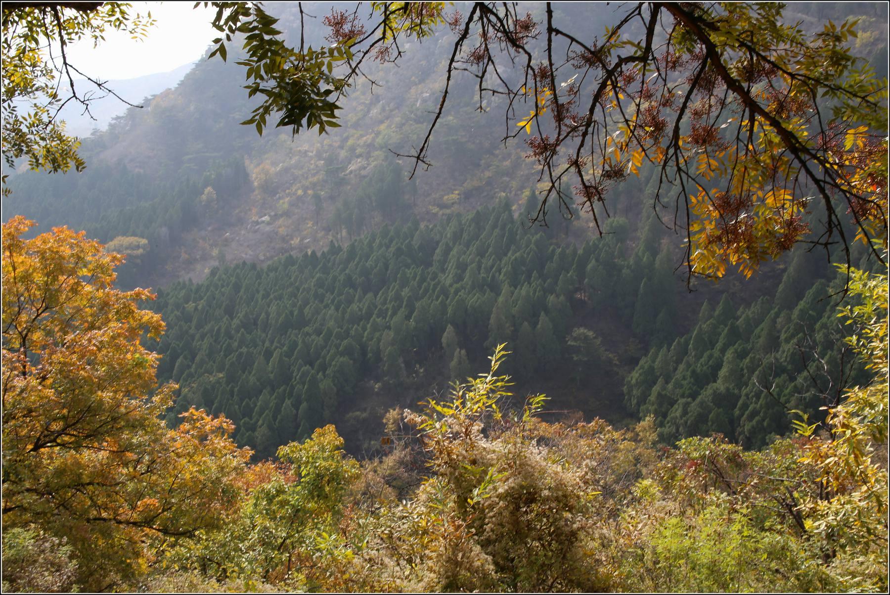 漫步莱芜华山国家森林公园 【8】
