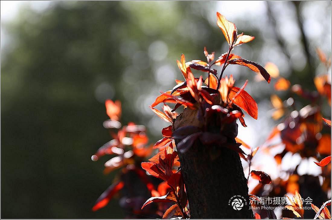 春末的孝义河 【2】