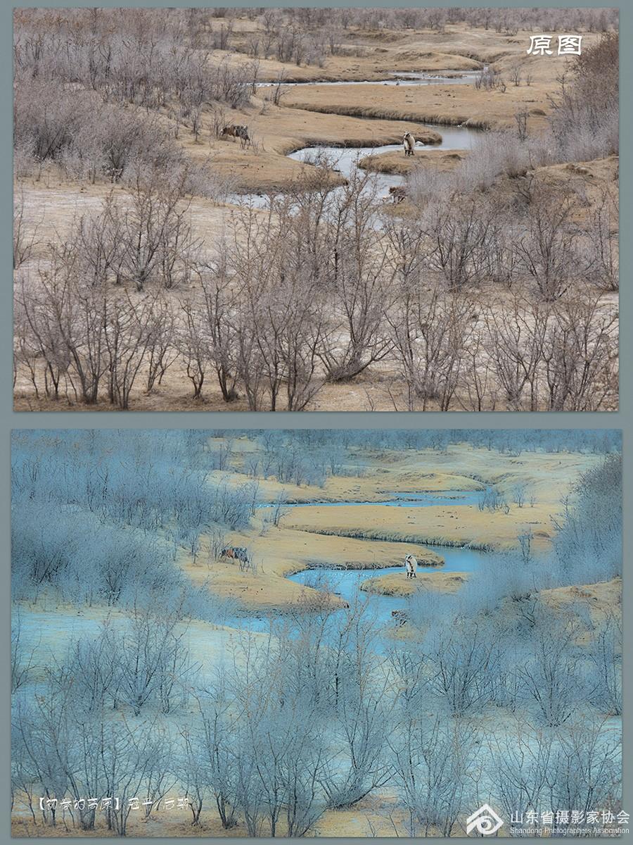 初春的草原(原图对比)s.jpg