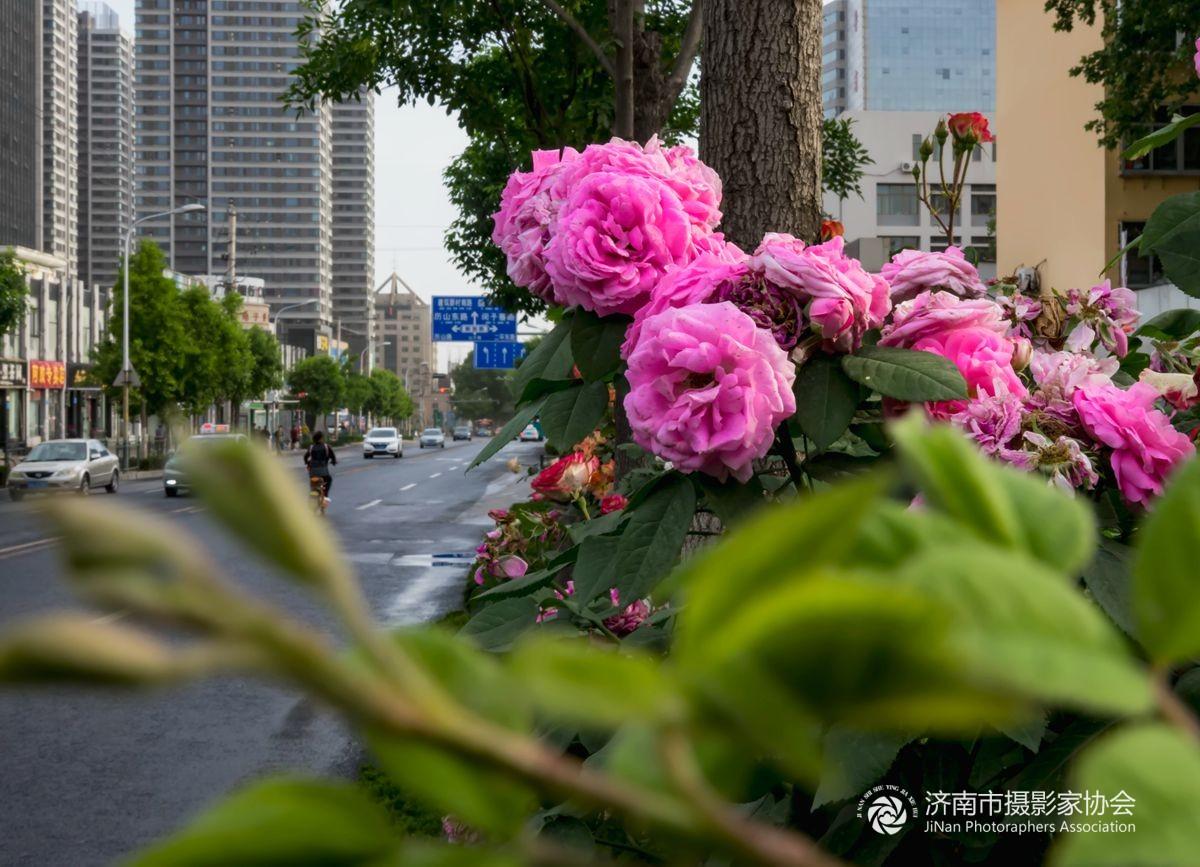 路边鲜花也精彩