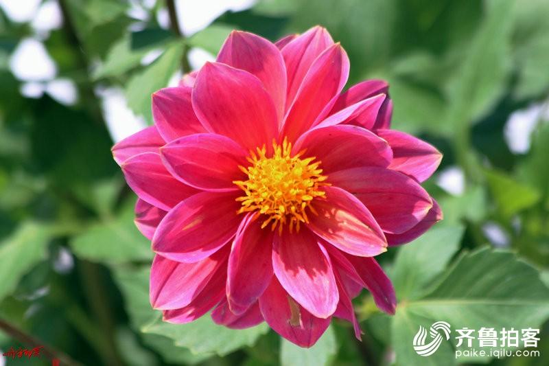 花儿朵朵为君开
